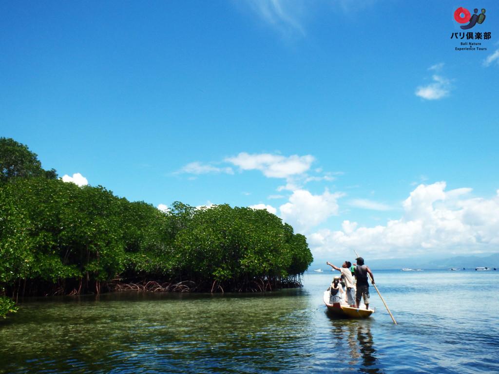 lembongan.mangrove