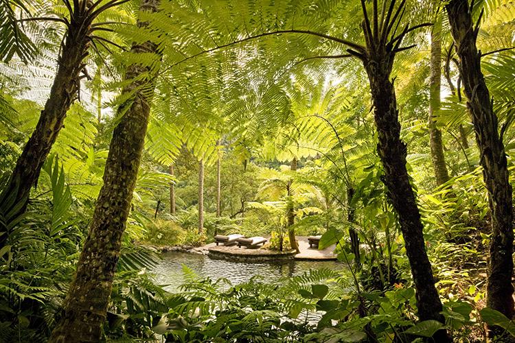 kedara-water-garden-750