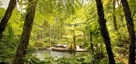 kedara-water-garden-aicatch-cut-980