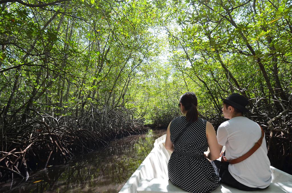 mangrovetour