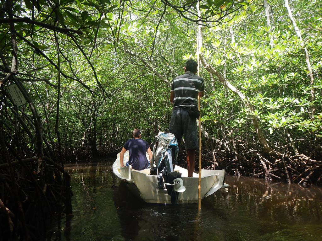 mangrovetour1