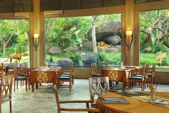 ライオンが見える!サボライオンレストラン