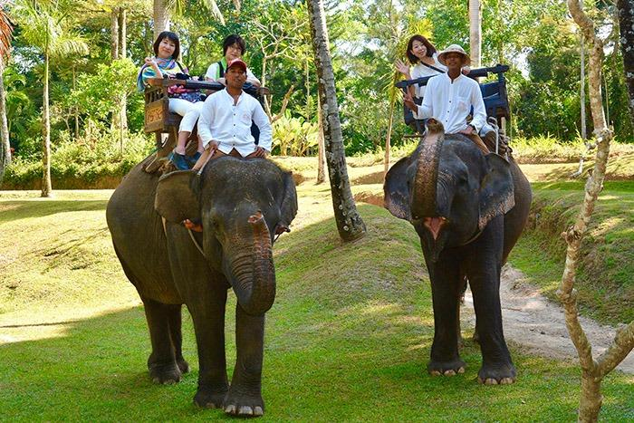 エレファントキャンプにいるのはスマトラ象。野菜や果物を1日に約200キロも食べるのだそうです。