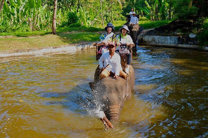 最後は池にザブンと行きます。象さん30分のエレファントライド体験ありがとう!