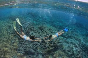 珊瑚礁の海でとことんシュノーケリング