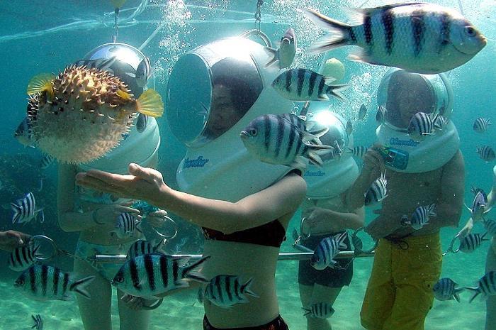目の前の熱帯魚や海の生物たちとの触れ合い!