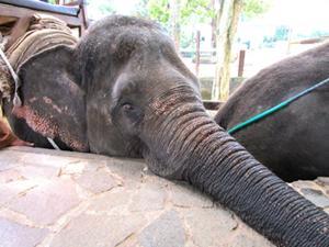 象と写真撮影(ご自身のカメラにて)