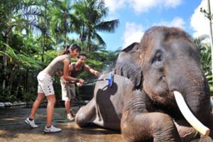 象の体を洗うお手伝い、象と一緒に象の池で入浴