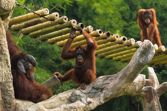 トラムから見る楽しい動物の動き!