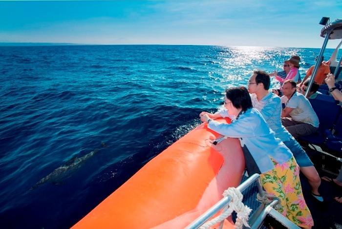 バリ島の美しい海を楽しみながら、イルカたちの自然な姿を見て楽しんでください。
