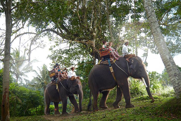スマトラ象の背中に乗り、約30分のエレファントライド