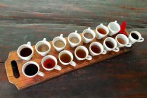 コーヒー農園 ウマパケル