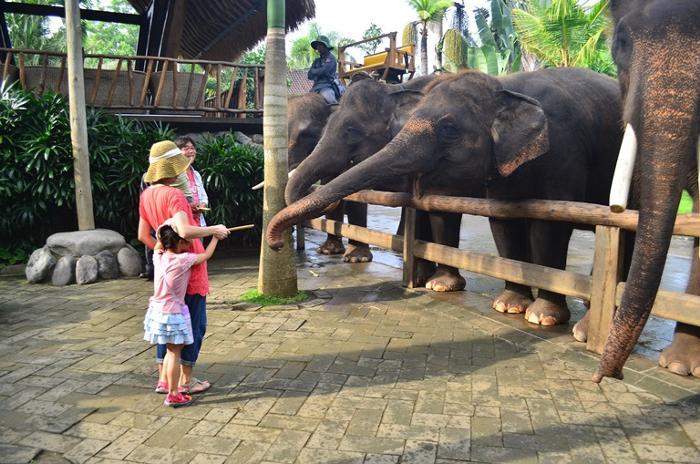 こんなに近くで象と触れ合えます。