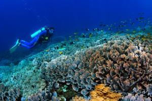 熱帯のサンゴ礁と美しい海が温かく迎えてくれます。トロピカルフィッシュに会いに行こう。