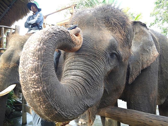 フレンドリーな象に餌をあげてみよう
