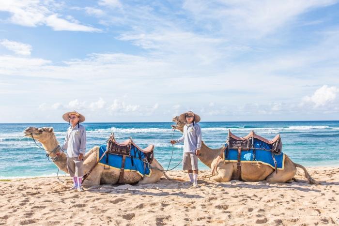 ヌサドゥアの眩しい砂浜でのキャメルライド!