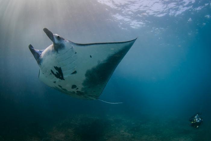 時期によっては素晴らしい海の生き物と出会えるかも。