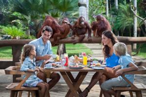 動物との触れ合いと朝食