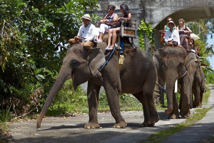 緑一杯の森の中、象さんの餌となる野菜や果物の広大な畑の景色を楽しみましょう。