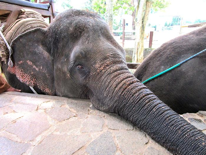 象さん30分のエレファントライド体験ありがとう!