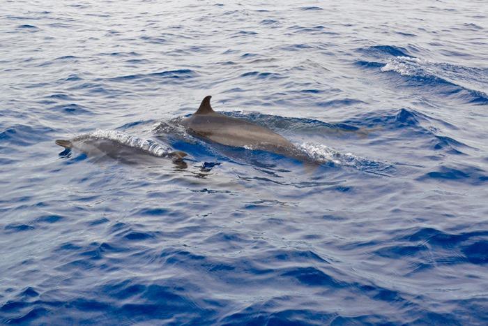 ヌサドゥアまたはウルワツの海岸沖へ向かいます。イルカとの遭遇は忘れられない体験となるでしょう