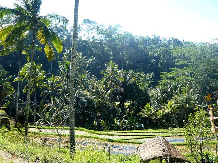 緑が美しい、グヌンカウィの景色