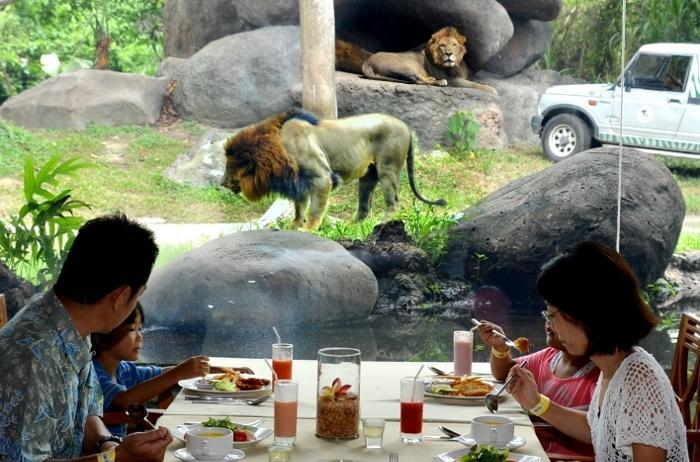 ライオンが見える!サボライオンレストラン(ライノ・パッケージ)