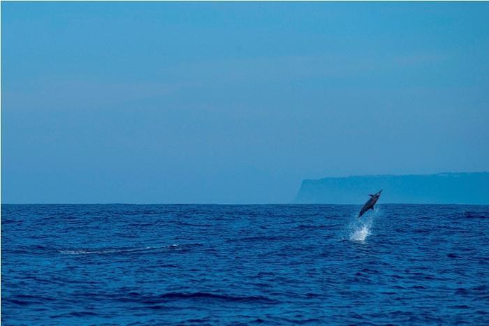 イルカの豪快なジャンプが見れるかも