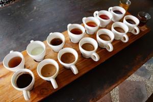 オーガニックコーヒー農園