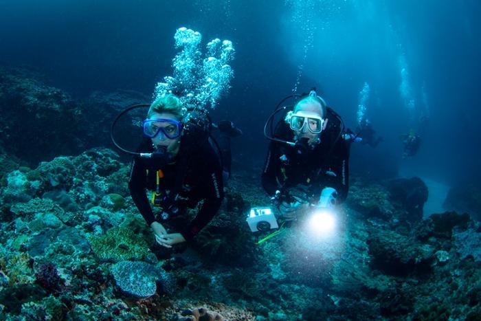 水中世界を探検しよう。バリハイが思い出に残る水中デビューをお手伝いします。
