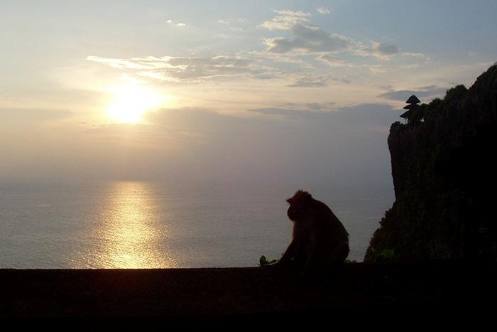 ウルワツの猿には眼鏡や帽子を取られないように注意