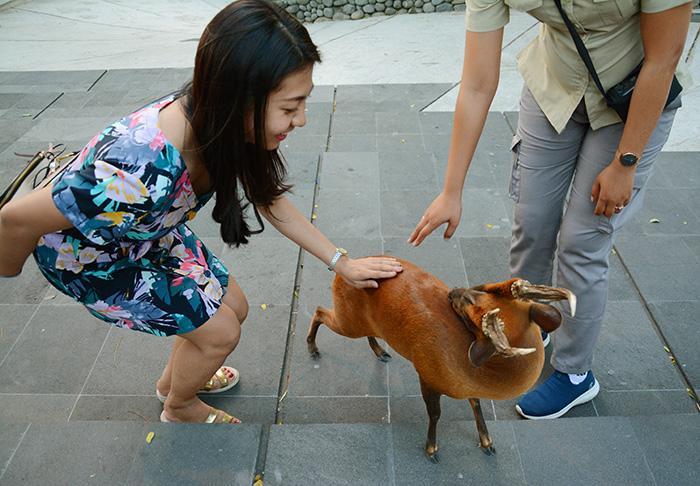 草食動物はおとなしくてかわいいですね(笑)