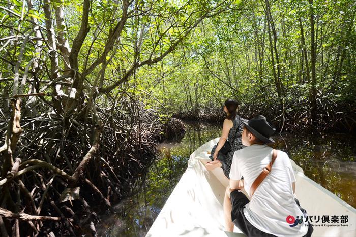 天然の酸素カプセル、マングローブの森