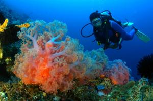 海中生物たちにもっと近づいてみたい?コーラルブルーの海で魚になってみませんか?