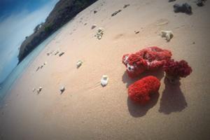 レッドビーチ