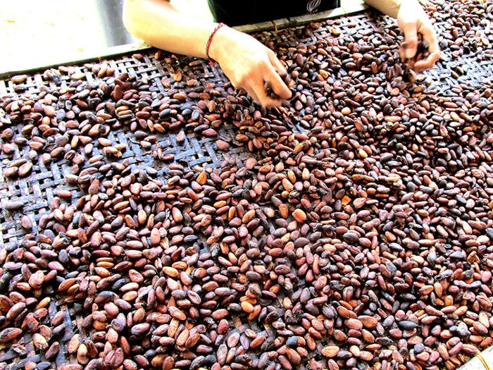 実はバリ島ではカカオの栽培が盛ん。