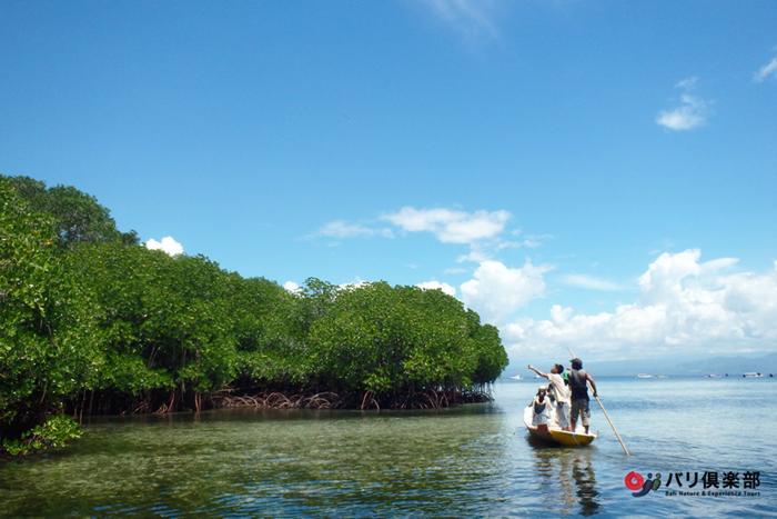 レンボンガン島の3分の1はマングローブの森