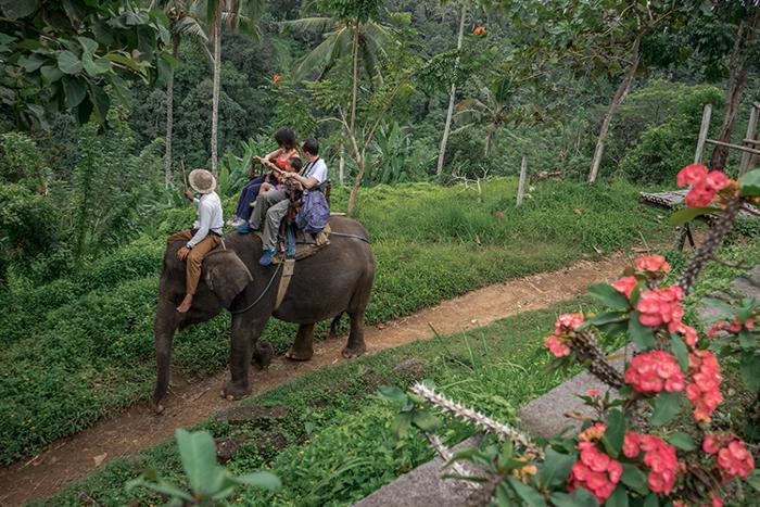 南国の木々や象さんの餌となる果物や野菜の畑も見えたりします