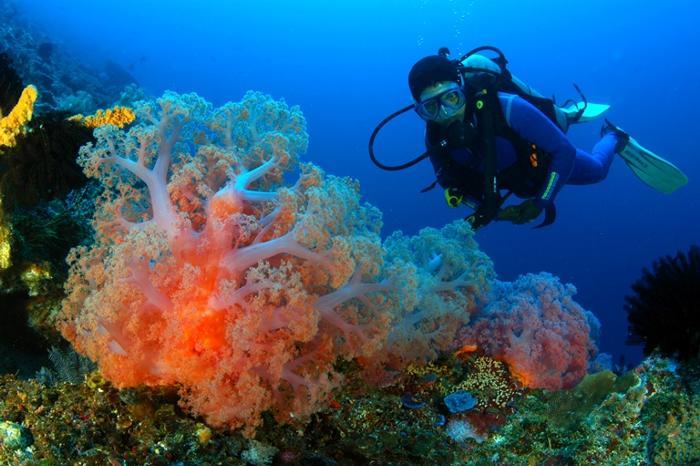 ダイビングのオプションもあり。コーラルブルーの海で魚になってみませんか?(有料アクティビティ)